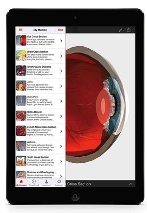 BioDigital image Eye Cross section